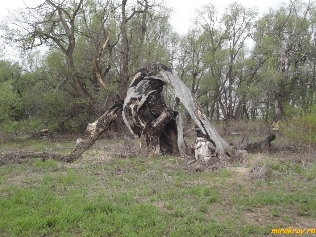 чудище, дерево, коряга, борьба, темный, светлый