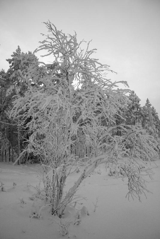 Зима, крестьянин торжествует!